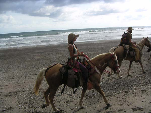 horsecaravan1.jpg