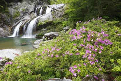 amegaerinotaki-kochi_15-05-07-0119.jpg
