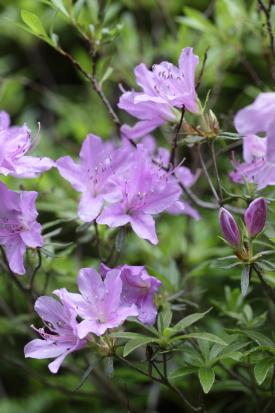 amegaerinotaki-kochi_15-05-07-0145.jpg