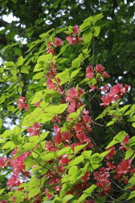 amegaerinotaki-kochi_15-05-07-0288.jpg