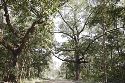 chitwan-nepal_14-11-09-0375.jpg
