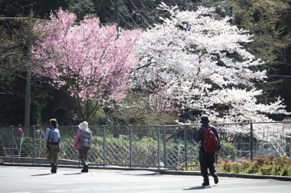 takakusayama-shizuoka_15-03-25-0552.jpg