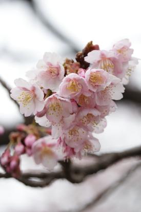 tosakamo-kouchi_15-02-15-0281.jpg