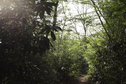 tsukubasan-ibaraki_15-04-26-0774.jpg