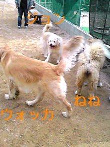 tamanya1219さんのブログ-110220_1454~01_Ed.JPG