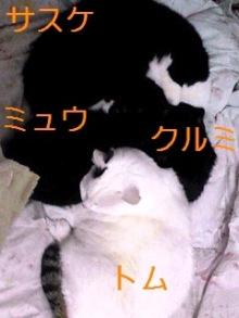 tamanya1219さんのブログ-110222_2334~01_Ed.JPG