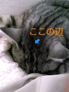 tamanya1219さんのブログ-110417_1706~02_Ed.JPG