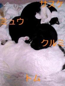 tamanya1219さんのブログ-110423_2350~01_Ed.JPG