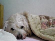 tamanya1219さんのブログ-110425_2344~01_Ed.JPG