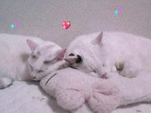 tamanya1219さんのブログ-110501_2113~01_Ed.JPG