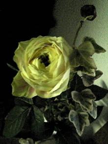 tamanya1219さんのブログ-110510_1517~01.JPG