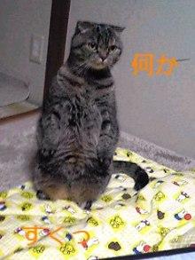 tamanya1219さんのブログ-101207_1630~01_Ed.JPG