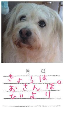 tamanya1219さんのブログ-110802_1625~01.JPG