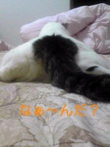 tamanya1219さんのブログ-110911_2241~01_Ed.JPG