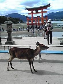 tamanya1219さんのブログ-111023_1230~01.JPG
