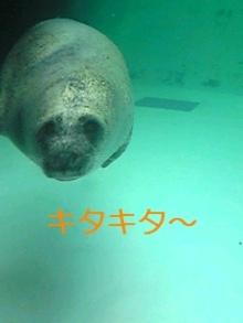 tamanya1219さんのブログ-111023_1354~01_Ed.JPG