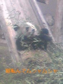 tamanya1219さんのブログ-111103_1413~01_Ed.JPG