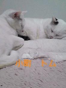tamanya1219さんのブログ-111115_2349~01_Ed.JPG