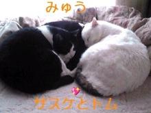 たまにゃライフ-130203_1627~01_Ed.JPG