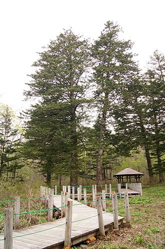 150518戸隠植物園⑦