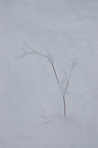 S-impermanence 枯れ木に積もる63