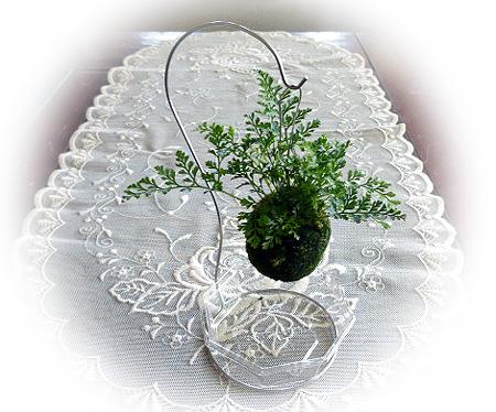 藻玉吊りシノブ