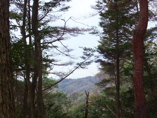 木々の隙間から垣間見える