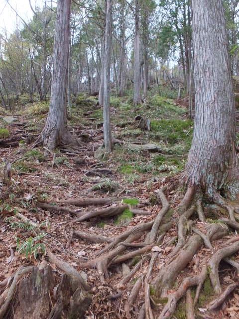 根が張りつめた道