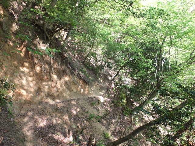 新緑輝く登山道