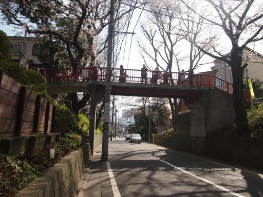 20150328・桜坂2-12
