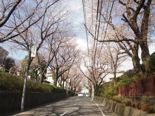 20150328・桜坂2-11