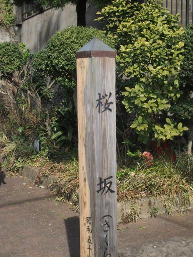 20150328・桜坂2-07