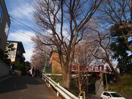 20150328・桜坂2-14