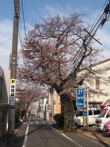 20150328・桜坂3-16