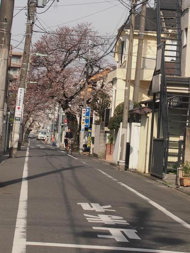 20150328・桜坂3-15