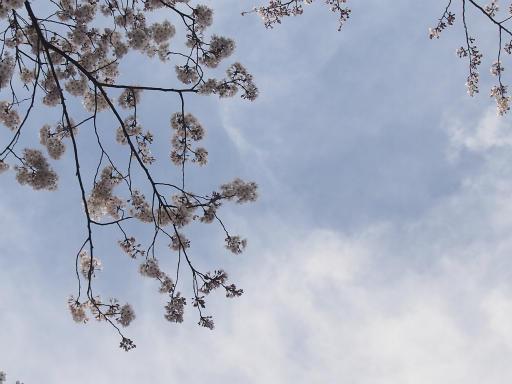 20150328・桜坂空12