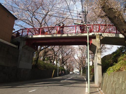 20150328・桜坂植物07・ソメイヨシノ