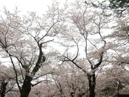 20150404・小金井1-15