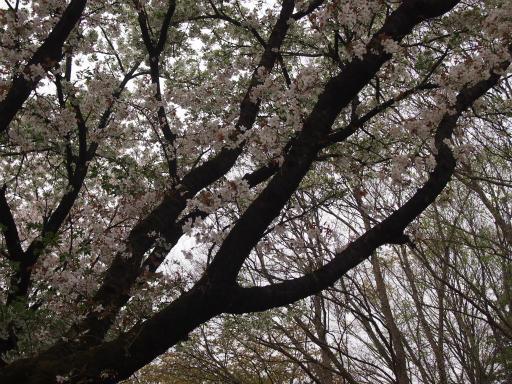 20150404・小金井2-01