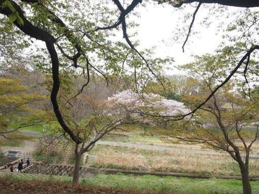 20150404・小金井3-05