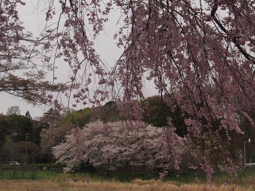 20150404・小金井空18