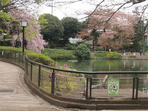 20150410・妙正寺川1-24