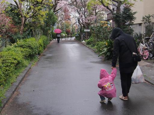 20150410・妙正寺川2-12