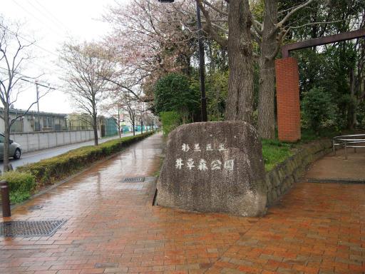20150410・妙正寺川2-13