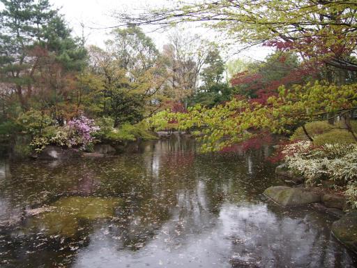20150410・妙正寺川2-22