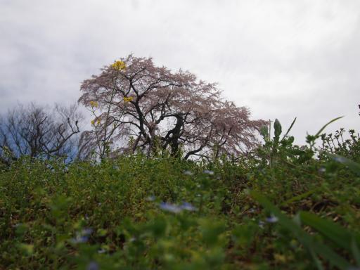 20150419・福島1-05