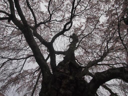 20150419・福島1-18