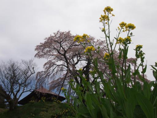 20150419・福島空前03