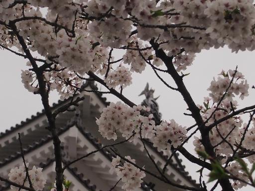 20150419・福島9-18