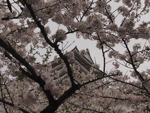20150419・福島9-17